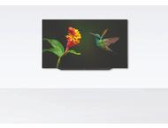 Loewe Bild 7.77 OLED 56437D50 Graphite Grey